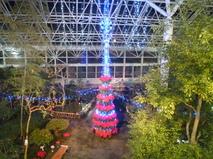 ポインセチアのクリスマスツリー